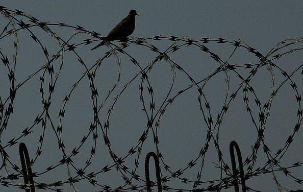 One bird on prison wires