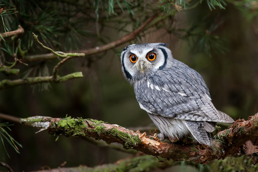 Spilling Coffee, Owls, Shoes: Top Superstitions Arabs Still Believe