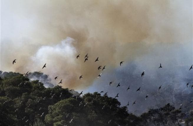 Birds fly away from flames in the village of Ussafiya in Haifa's Carmel Forest on December 4, 2010