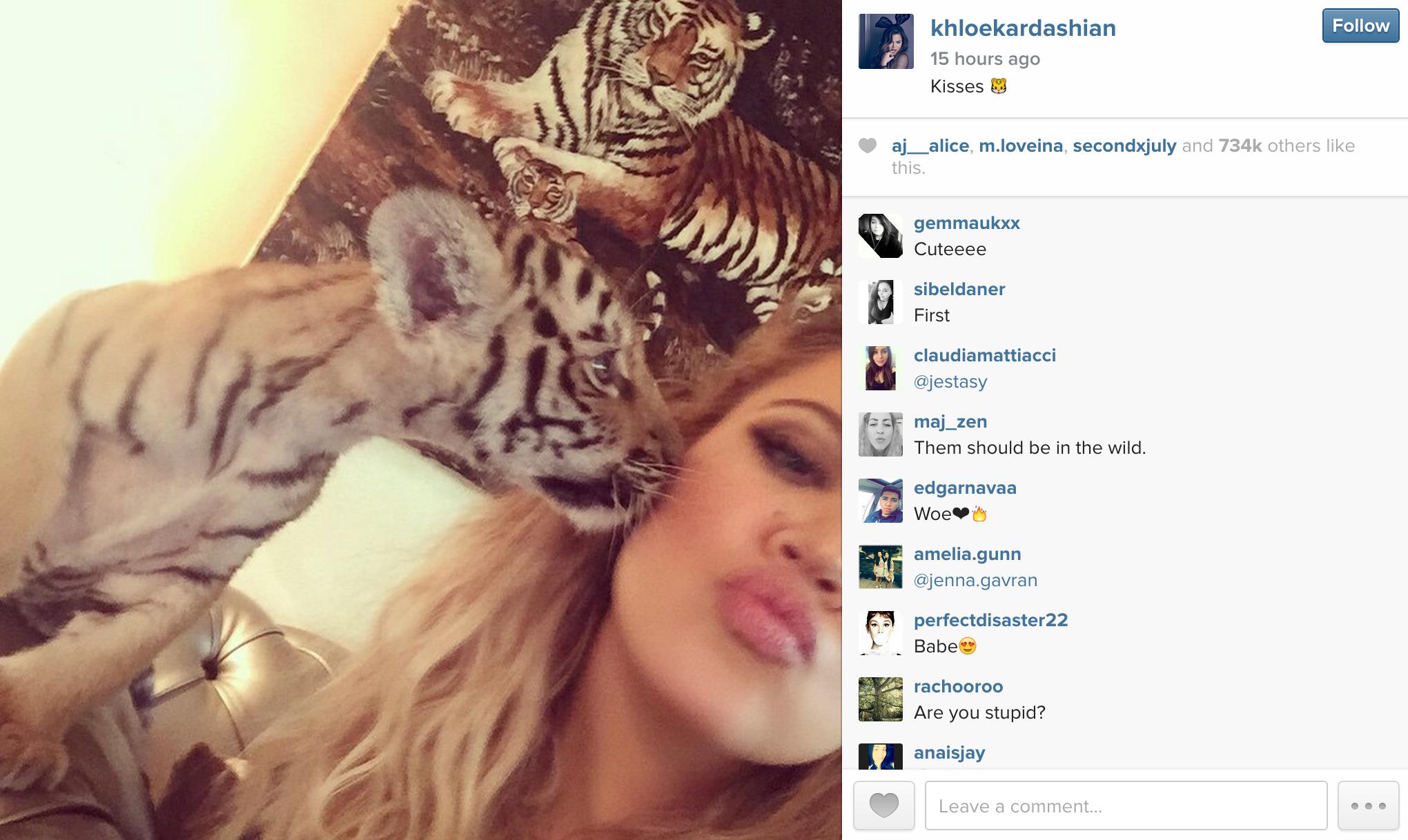 Animal rights activists roar with anger over Khloe Kardashian's Dubai tiger selfie!