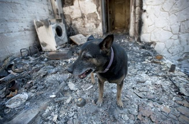 A dog stands at a burnt house in the village of Ein Hod in the outskirts of Haifa.