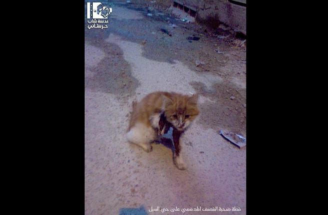 Syrian kittens, just like the free Syrian people, demonstrate tremendous courage on a daily basis. Shrapnel from artillery fire by Assad forces shredded this kitten's limb, yet she is still committed to the struggle for Syria's freedom.