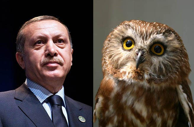 Sat atop his perch, perusing the world south of his home, wise ol' Recep Tayyip Erdoğan has kept a cool head, even after the bombing on Turkey's border.  Even Bibi the Bear has issued a Flotilla apology to the sagacious leader in recent days.