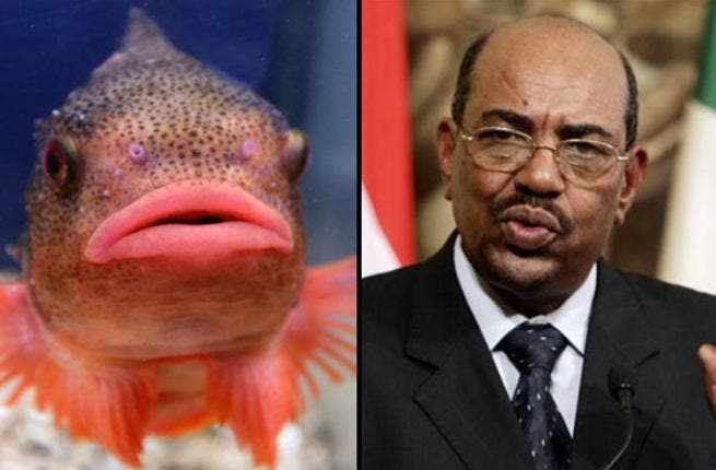 Omar Bashir of Sudan:  This fat-lipped fish may look more likely to pucker up and kiss you than give you the war criminal treatment but appearances can be deceptive and this uncompromising fellow's pout is more piranha than Nemo.