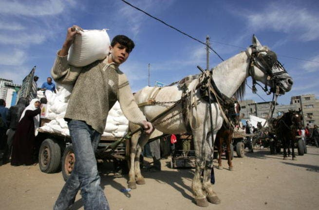 Palestinians receive food aid from the United Nations Relief Works Agency (UNRWA) in the al-Shati camp, Gaza (Getty)
