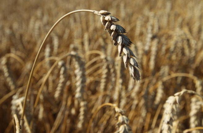 Jordan produces around 5 per cent of its needs of wheat, while the rest is imported from other countries, mainly the US