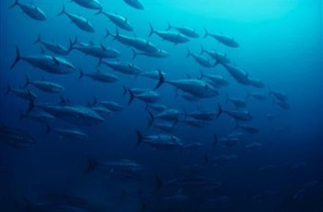 Two-month ban on fishing Al Badah in Abu Dhabi