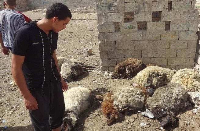An Iraqis looks at dead sheep killed in two roadside bombs that detonated in a sheep market in the northern city of Kirkuk (Marwan Ibrahim / AFP)