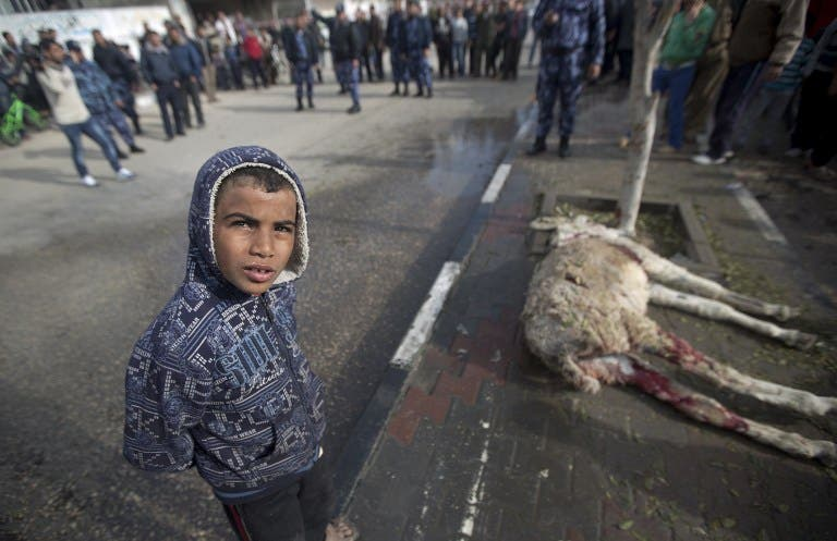A Palestinian boy stands next to a donkey killed in an Israeli air strike in Gaza City, on January 19, 2014.  [AFP]