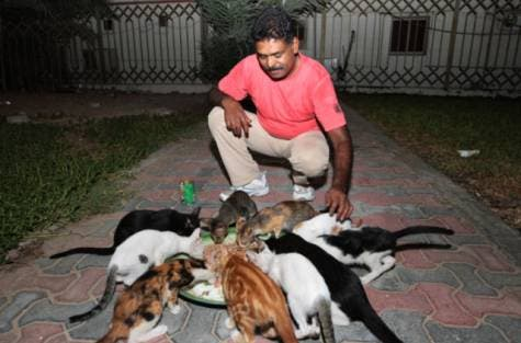As soon as he arrives, dozens of cats emerge from behind the bushes at the snap of his fingers. (EXPRESS/AHMED KUTTY)