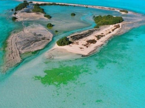 Bi Tinah Island, Abu Dhabi, is a habitat for groups of plant and animal species such as coral reefs, dugongs, natural mangroves, hawksbill turtles, dolphins, ospreys and socotra cormorants.