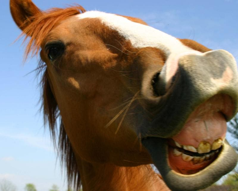 Horses contacted by Al Bawaba were apparently overjoyed at the news. (Photo courtesy of Flickr)