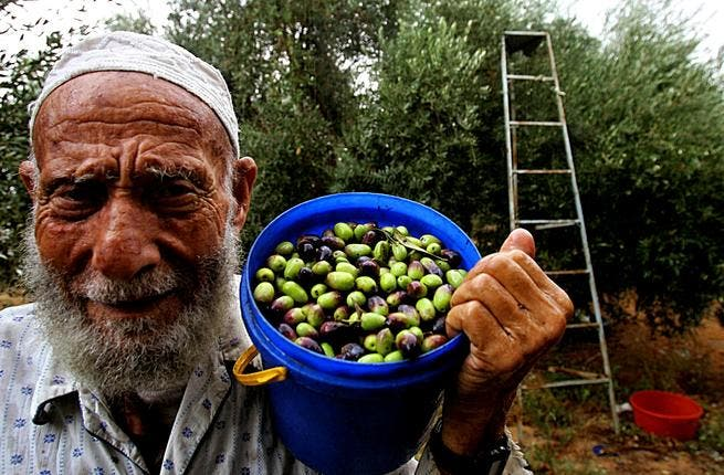 Jordan's olive oil production saw an 11 per cent increase in 2012