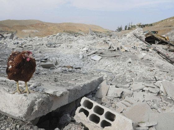 A lone chicken is seen in the rubble of the site where an Israeli airstrike struck Damascus earlier this month. AFP Image