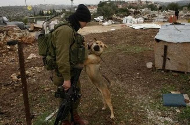 The importance of Israeli dogs