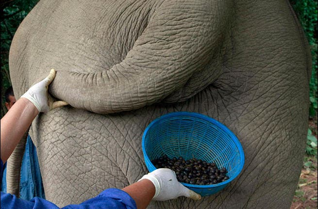 The Middle East has had its first taste of elephant dung coffee (Photo: ugottabkiddinme)