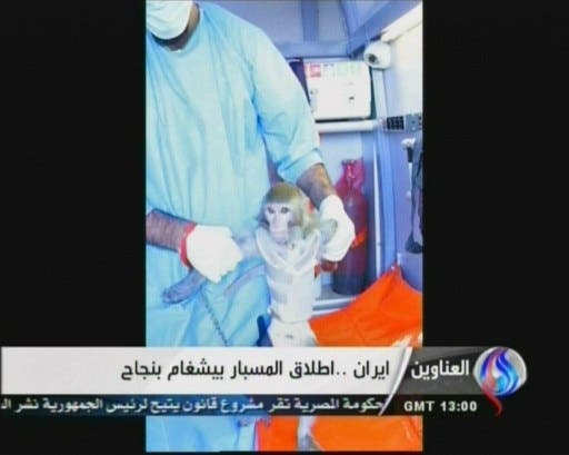 One of the photos released of Iran's simian astronaut (Photo: AFP / Al-Alam TV)