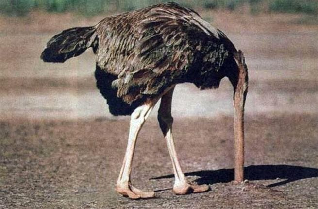 Ostriches are rumored to be nonplussed about the idea.