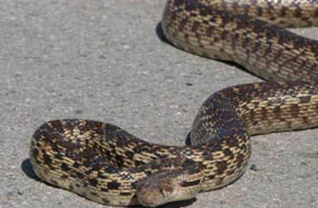 The zoo's snake rehab program has got residents all riled up.