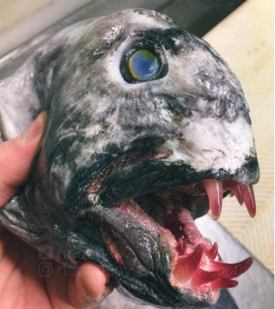 روسي يلتقط صورًا لكائنات حية مرعبة في أعماق المحيط | البوابة