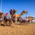 Free-for-all fun in Dubai (Shutterstock)