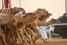 السعودية انشغلت بسباق الهجن