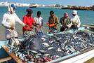 The ministry is expecting to raise fish production to 1.4mn tonnes in 2023 from 280,000 tonnes in 2016. (Shutterstock)
