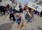 """Dog owners and their pets gather before participating in a pro-EU, anti-Brexit march, calling for a """"People's Vote on Brexit"""", in central London on October 7, 2018. (Tolga AKMEN / AFP)"""