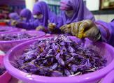 In this photograph, Afghan workers separate saffron threads from harvested flowers at a processing centre in Herat province.  HOSHANG HASHIMI / AFP