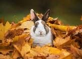 الأرانب من الحيوانات الاجتماعيّة ومن المُمكن التحدّث إليها ومداعبتها