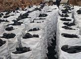 الأمم المتحدة تحظر تصدير الفحم الصومالي منذ 2012 لقطع مصادر التمويل عن حركة الشباب