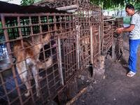 This photo taken on October 25, 2019 shows a man locking a cage full of dogs at a slaughterhouse in Siem Reap province. Cambodian dog meat traders drown, strangle and stab thousands of canines a day in a shadowy but sprawling business that traumatises workers and exposes them to deadly health risks like rabies. TANG CHHIN Sothy / AFP
