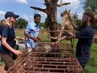 This photo taken on October 27, 2019 shows former restaurant owner Khieu Chan (C) watching as members of the non-governmental organisation (NGO) Four Paws team take part in an operation to rescue dogs from the slaughterhouse in Takeo province. Cambodian dog meat traders drown, strangle and stab thousands of canines a day in a shadowy but sprawling business that traumatises workers and exposes them to deadly health risks like rabies. TANG CHHIN Sothy / AFP