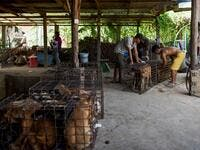 This photo taken on October 26, 2019 shows workers transporting dogs in cages at a slaughterhouse in Kandal province. Cambodian dog meat traders drown, strangle and stab thousands of canines a day in a shadowy but sprawling business that traumatises workers and exposes them to deadly health risks like rabies. TANG CHHIN Sothy / AFP