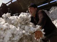 Uzbekistan has nearly eliminated forced labour from its cotton industry (Twitter)