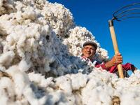 Some big Western retailers are boycotting cotton from Uzbekistan because of the government's taste for slave labour (Twitter)