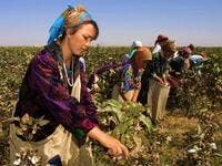 Uzbekistan's cotton growers walk in a cotton plantations outside Tashkent (Twitter)
