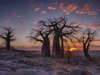 Sunrise with Baobab trees in foreground at LeKubu island, Botswana (Shutterstock)