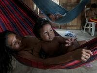 The local and state governments were called to assist to no avail. With the Amazonas state health system saturated, indigenous people turn to their ancestral knowledge about the region's nature to stay healthy and treat possible symptoms of the novel coronavirus. Ricardo OLIVEIRA / AFP