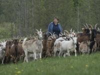"Helena Wroblewska owner of the ""Nad Arem"" farm specialised in goat cheese - is seen among the goat herd in the meadow in the Masuria - polish lake region, May 15, 2020. The sheep and cows are in the meadow, the cheese is ripening in a room on the ground floor -- just the kind of scene attracting increasing numbers of Polish cityslickers away from the urban jungle. Wojtek RADWANSKI / AFP"