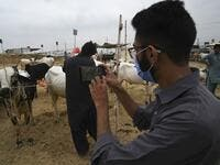 "A Muslim customer takes a photo of a cow at a cattle market set up for the upcoming Muslim festival Eid al-Adha also called ""Festival of the Sacrifice"", in Rawalpindi on July 20, 2020. Aamir QURESHI / AFP"