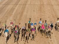 A participant in one of the Dubai camel festivals (Twitter)