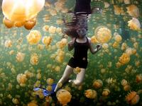 "Swim With Millions Of Jellyfish in Palau: There's a place on the island nation of Palau called Ongeim'l Tketau, or ""Jellyfish Lake"" where you can literally swim with millions of jellyfish. (nationalgeographic.com)"