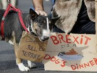 "Dog owners and their pets gather before participating in a pro-EU, anti-Brexit march, calling for a ""People's Vote on Brexit"", in central London. (Tolga AKMEN / AFP)"