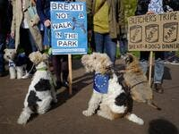 "Dog owners and their pets participate in a pro-EU, anti-Brexit march towards the Houses of Parliament, calling for a ""People's Vote on Brexit"", in central London. (Tolga AKMEN / AFP)"