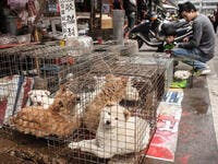China Bans Wild Animal Trading Temporarily Until The Viral Epidemic Eases