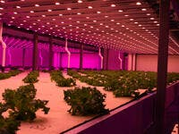 Abu Dhabi's Desert To Be The Home of World's Largest Indoor Farm
