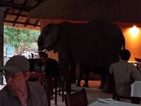Before long, the family of elephants turns away from the tourists and moves out of the room. (Video Screenshot)