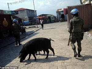 A soldier of the MINUSTAH (United Nations Stabilization Mission in Haiti) peacekeeping contingent walking past a pig while patrolling in the Cite Soleil slum of Port-au-Prince in 2014. (AFP/ File Photo)