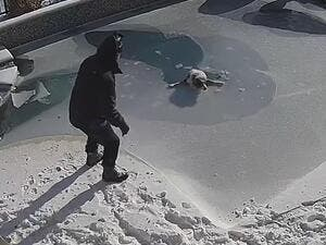 Moments later the dog plunged into the frigid water after the surface ice gave way. (Video Screenshot)